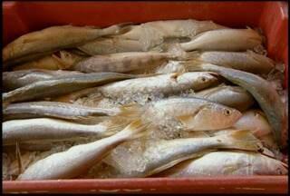 Pescadores de São João da Barra, RJ, estão há semanas sem peixe - Ventos tornam saída de barcos perigosa.