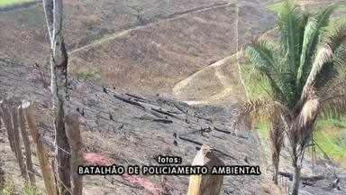 Batalhão Ambiental encontra área de desmatamento no interior - Área desmatada e queimada foi localizada em Matriz de Camaragibe.