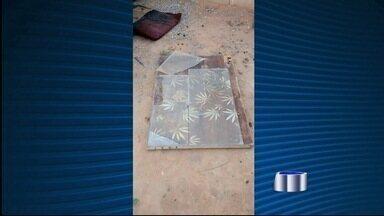 Polícia flagra dois pés de maconha em uma casa no bairro Castolira em Pinda, SP - Dono da droga foi ouvido e liberado.