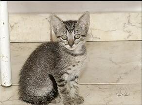 Associação socorre animais que foram abandonados nas ruas de Palmas - Associação socorre animais que foram abandonados nas ruas de Palmas