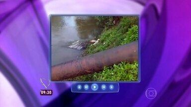Assista a um vídeo impressionante de um cachorrinho que foi quase comido por um jacaré - O animal se salvou por pouco!