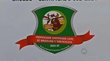 Propriedade é a primeira de MT a receber selo livre de Tuberculose e Brucelose animal - Selo dado pelo Ministério da Agricultura é um diferencial que pode se transformar em melhoria de renda.