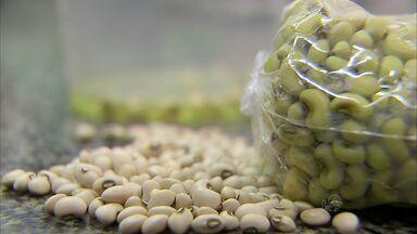 Grupo é preso por usar corante para falsificar feijão verde em Fortaleza - Três mulheres e um homem tingiam produto e vendiam no Bairro Centro. Grupo usava corante para 'transformar' feijão branco em verde.