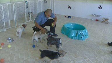 Curso de cuidados básicos com cães será realizado em Ji-Paraná - Curso de cuidados básicos com cães será realizado em Ji-Paraná.