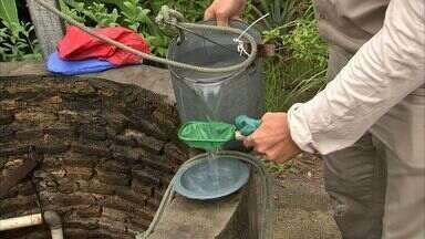 Com chuvas nos últimos dias, aumenta alerta para a dengue - A população deve ficar atenta e evitar acumular água em recipientes.