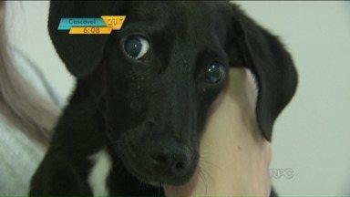 Conheça a Cinomose, doença que ameaça a saúde dos cachorros - Transmitida por meio de um vírus, ela ataca principalmente no primeiro ano de vida. Muitos não resistem.