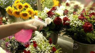 Por causa do calor, comércio de flores sofre prejuízos no Sul do Rio - Produção foi afetada pelas altas temperaturas e teve aumento nos preços; paisagista dá dicas de como cuidar das plantas economizando água.