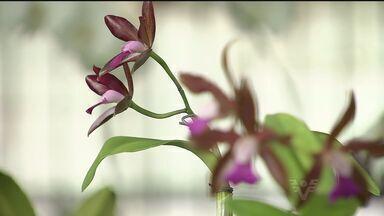 Exposição mostra diversas opções de flores - No Dia Internacional da Mulher, veja dicas de flores para presente
