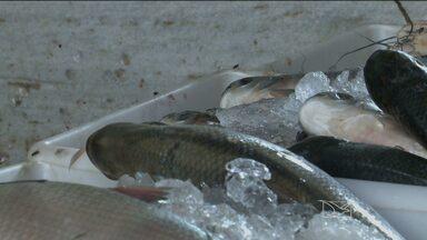 Feiras e mercados da capital são fiscalizados pela Vigilância Sanitária - A preocupação é com as condições de venda de peixes e com a higiene nesses locais.