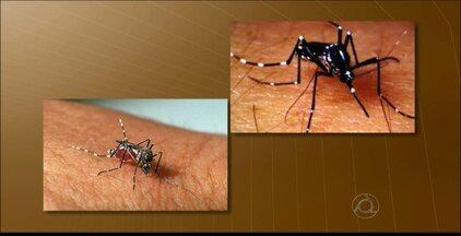 Secretaria de Saúde disponibiliza serviços de combate à dengue em João Pessoa - Veja como a população pode ajudar a impedir a proliferação da doença.