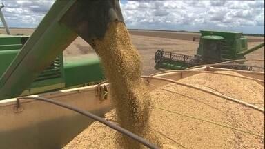 Aumento do custo de produção da soja preocupa agricultores de MT - O custo do frete e dificuldade para escoar a safra reduziram os ganhos. O Estado é o maior produtor do grão do Brasil.