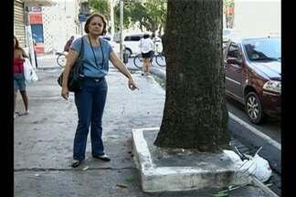 Em Belém, mangueiras são alvo de vandalismo da população - Pessoas estão jogando cimento nos canteiros onde estão plantadas as árvores e em outros casos, colocando prego para afixar cartazes e documentos.