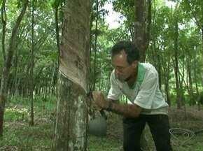 Corredor faz preparação para provas entre seringueiras, no Sul do ES - Um lavrador de Anchieta faz parte de um treinamento indo de uma árvore a outra.