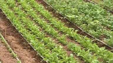 Burocracia atrapalha irrigação de plantações de frutas da região de Jundiaí - Os produtores rurais da região de Jundiaí (SP) que fazem parte do circuito das frutas enfrentam problemas para irrigar a plantação. Devido à estiagem de 2014, o Departamento de Águas e Energia exigiu documentação e pagamento de taxa para permitir a irrigação. Os agricultores deram entrada no processo, mas reclamam da demora na liberação.