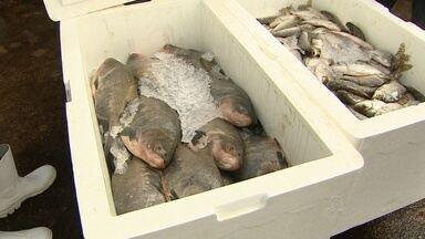 Preço do peixe em Santana na ultrapassa R$ 10 - Em Santana também vai ter venda de peixe mais barato. O preço do quilo não passa de R$ 10.
