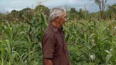 Agricultores de Pedro II sofrem com escassez de chuva e muitos perderam colheita - Agricultores de Pedro II sofrem com escassez de chuva e muitos perderam colheita