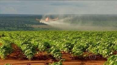 Uso excessivo de agrotóxicos nos alimentos no Brasil pode aumentar casos de câncer - Um documento divulgado pelo Inca alerta sobre os riscos do excesso de pesticidas no campo. Mas o estudo afirma que a exposição a resíduos de agrotóxicos nos alimentos e no ambiente pode afetar toda a população.