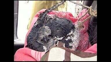 Gavião-real é atropelado na BR-101, em Sooretama, ES - Instituto Chico Mendes (ICMBio) disse que ave está ameaçada de extinção.