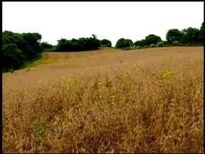 Governador quer prorrogar prazo para cadastro de agricultores - Determinação é de que todos os produtores registrem suas propriedades.