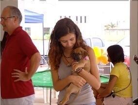 Mais de 30 animais esperam por um lar na feira de adoção em Palmas - Mais de 30 animais esperam por um lar na feira de adoção em Palmas
