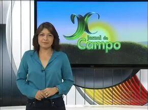 Confira os destaques do Jornal do Campo deste domingo (19) - Confira os destaques do Jornal do Campo deste domingo (19)