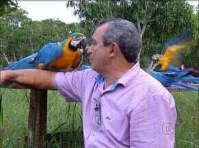 Relação de amizade entre araras e empresário chama a atenção no Tocantins - Relação de amizade entre araras e empresário chama a atenção no Tocantins