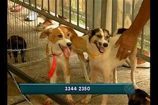 Centro de Zoonoses promove feira de adoção de animais em Belém - Sesma diz que feiras de adoção deverão ser itinerantes a partir de maio.
