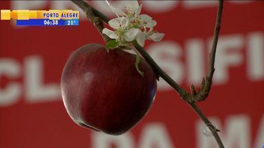Festa da maçã valoriza a produção da fruta na Serra Gaúcha - Cidade de Veranópolis, RS, é pioneira na produção.