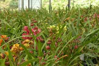 Produtores de flores do Alto Tietê apostam em altas vendas no Dia das Mães - Agricultores esperam vender muitas flores na data comemorativa.