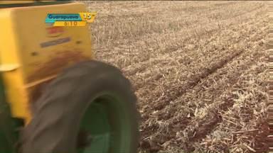 Agricultores esperam safra de trigo melhor do que a de 2014 - O Paraná é o maior produtor de trigo do Brasil. E o plantio da próxima safra já começou no estado. Apesar de a área plantada estar menor neste ano, os agricultores esperam uma safra melhor do que a de 2014.