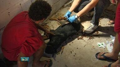 Dois cachorros são encontrados abandonados em terreno de construtora - Animais pertencem à Guerreiro Disposto, empresa que faz segurança de imóveis com cães.