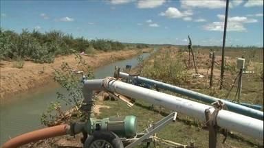 Falta de chuva diminui a capacidade da represa de Sobradinho - Por causa disso, a área de plantio de melão irrigado no norte da Bahia foi reduzida.