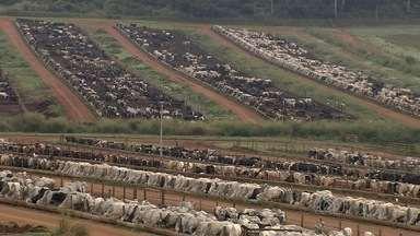Consumidores se assustam com a alta no preço da carne vermelha, em Goiás - No campo, período de engorda do gado já começou. A perspectiva é que a arroba do boi continue valorizada.