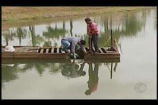 Começam obras de drenagem da Lagoa Grande em Patos de Minas - Amostras da água foram recolhidas para análises e peixes são retirados. Objetivo é retirar resíduos depositados no fundo do lago.