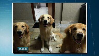 Veja fotos dos bichinhos de estimação de telespectadores, no Bom Dia Ceará - Envie também a sua foto: g1.globo.com/ce