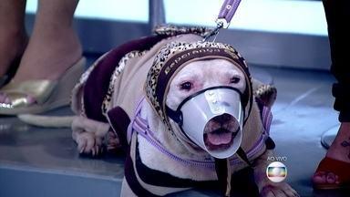 Estudante de veterinária salva pitbull no meio do trânsito - Machucada e desnutrida, a cadela foi indicada para a eutanásia, mas Mariana cuidou do animal, que se recuperou