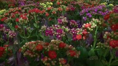 Exposição de flores atrai muita gente nas comemorações do aniversário de Umuarama - São mais de 100 tipos de flores pra serem apreciadas ou pra levar pra casa.