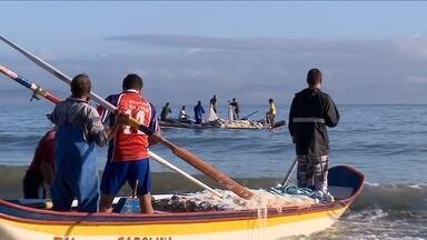Tainhas são capturadas no Norte da Ilha - Tainhas são capturadas no Norte da Ilha