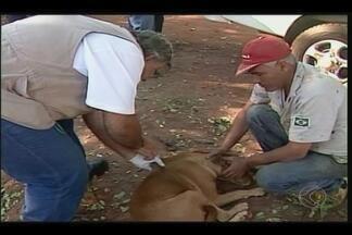 Vacinação antirrábica é feita em Ituiutaba - Agentes da Zoonoses percorrem fazendas do município.