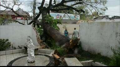 Aesa registra ventos acima da média em João Pessoa - Os ventos chegaram a 50 km por hora na última noite da capital, causando alguns prejuízos pela cidade de João Pessoa.