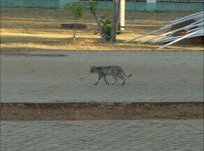 Veterinários orientam sobre cuidados ao adotar animais encontrados na rua - Veterinários orientam sobre cuidados ao adotar animais encontrados na rua