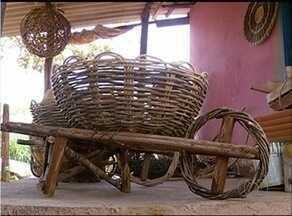 Artesãos descobrem e investem no cipó tiririca em Araguaína - Artesãos descobrem e investem no cipó tiririca em Araguaína