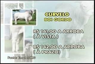 Confira a cotação do boi - Em Curvelo a arroba do boi custa R$ 141,00 à vista e R$ 142,00 à prazo.