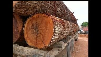 Motoristas de caminhões com madeira apreendida são multados - Multas somaram valor de R$25.500