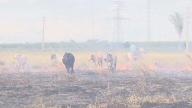 Um incêndio destruiu parte de uma área rural em Ariquemes - Fogo chegou a ameaçar as torres de transmissão de energia elétrica, mas foi controlado.