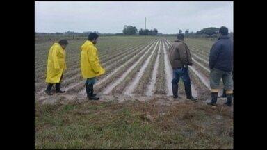 Prejuízos em plantações de cebola em Rio Grande e São José do Norte, RS, são avaliados - Chuva em excesso causou prejuízos em canteiros de produtores rurais