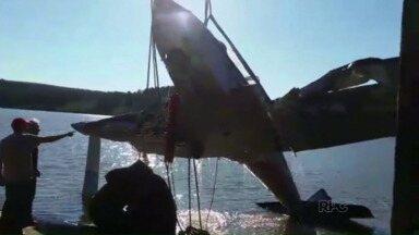 Avião é retirado da água - A operação para retirada da aeronave foi ontem à tarde.