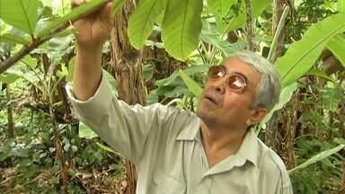 Agricultores obtêm grande produção de cupuaçu na serra do Pacoti - NE Rural sobe a serra para mostrar produção.