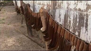 Lavrador coleciona ferramentas em Porangatu - Idoso guardou todo material que ele usou durante os 61 anos em que trabalhou no campo como forma de recordação.