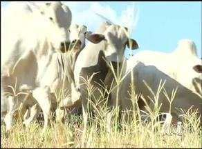 Reportagem especial mostra panorama da agricultura do Tocantins - Reportagem especial mostra panorama da agricultura do Tocantins